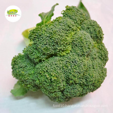 Export Wholesale High Quality Organic Chinese Green Broccoli