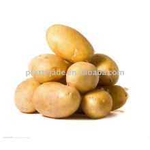 Proveedor de patatas
