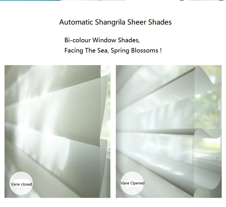 Electric Shangrila Shades