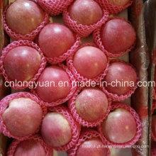 Nova Qualidade Boa Colheita de Fresh Qinguan Apple