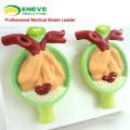 KIDNEY07 (12436) modèle anatomique pathologique de protéine d'urine de rein pour l'éducation