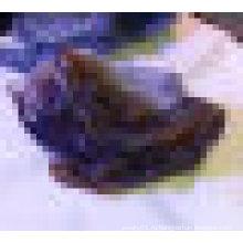Статуэтка животного ящерицы из полудрагоценных камней