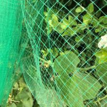 Plastic Garden Anti Bird Netting