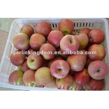 unbagged Fresh Qinguan Apple