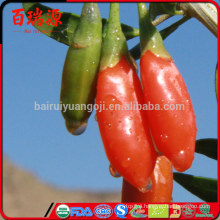 Organic food goji berry import goji berries ningxia goji appetizing