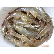 Camarón blanco congelado HL002 del mar para la venta