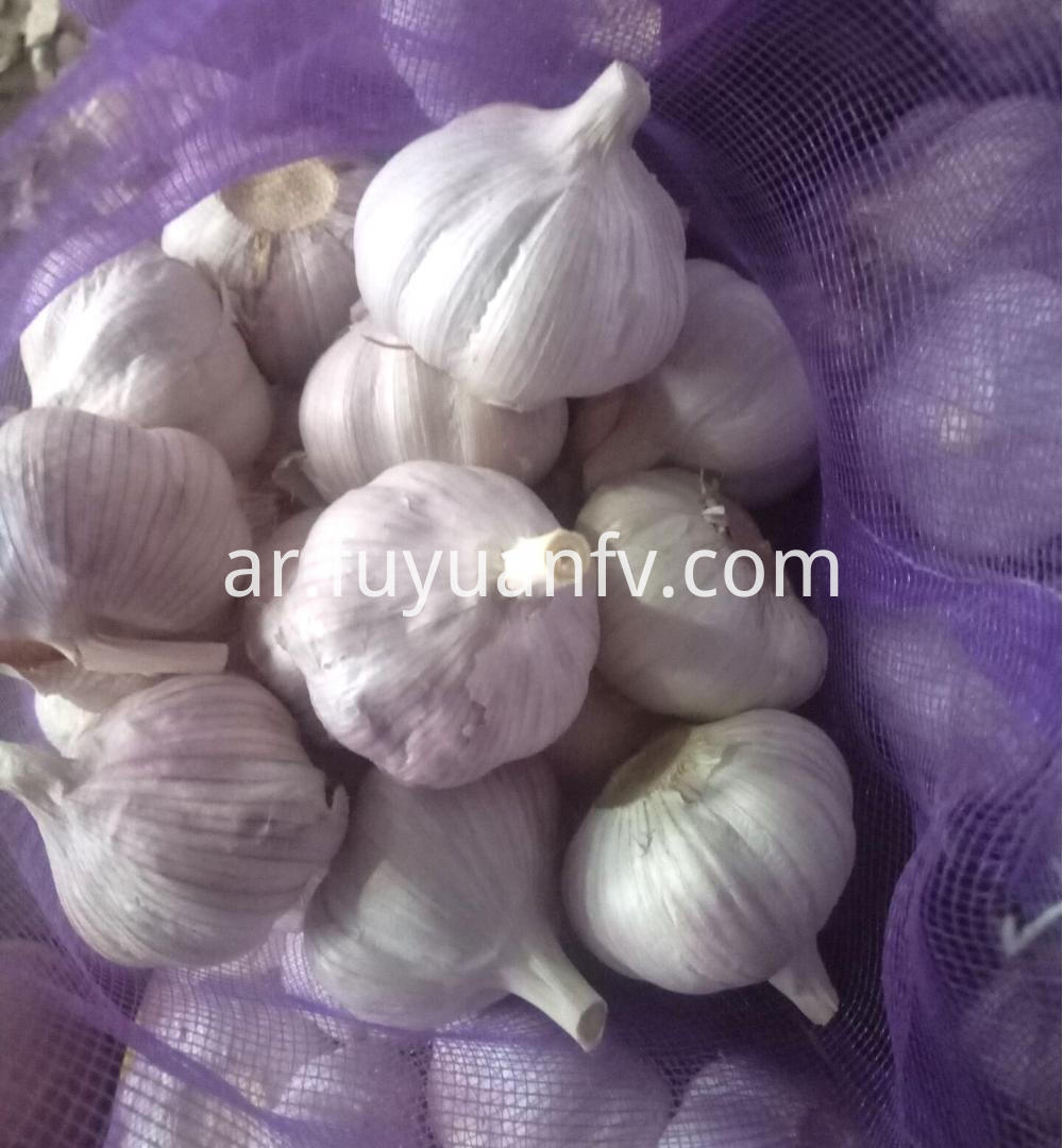 Normal White Garlic For Sale