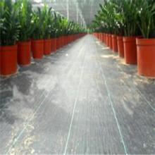 Tejido de PP Tejido de tela de malezas utilizado en la agricultura