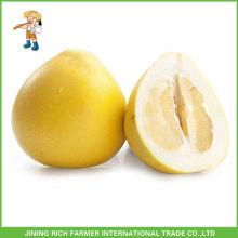 Hot Sale Chinese Pinghe Fresh Honey Pomelo Jining Rich Farmer International Trade Co.,Ltd
