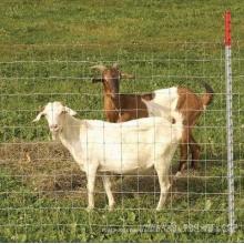 The Posts of Farm Fence/Austrilia Farm Fence /Newzealand Farm Fence