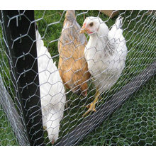 Galvanized Chicken Wire Mesh with Good Quality (TS-J601)