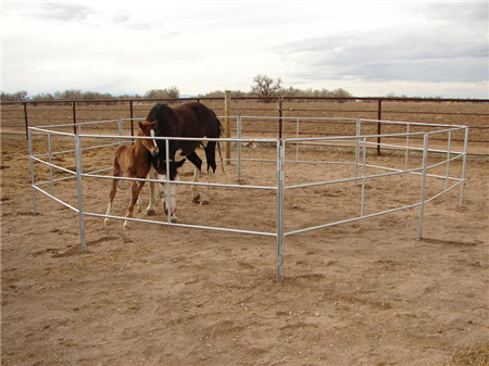 Horse Fence7