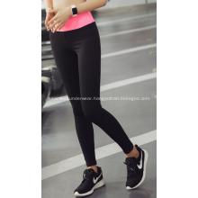 Sport Legging Woman Summer Running Tight Pant