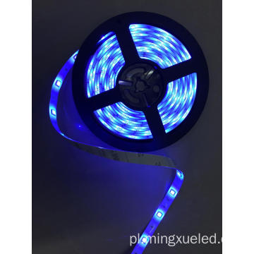 5050SMD Bule Led Strip światło