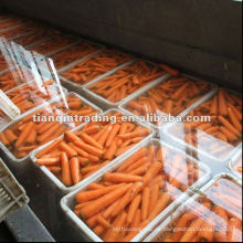 gelbe Karotte zum Verkauf