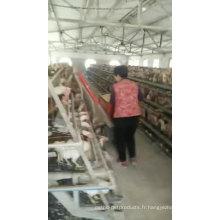 Alibaba Couche de batterie / Cage de poulet de poulet