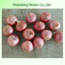 Oignon blanc / rouge / jaune à prix raisonnable en Chine