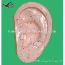 Vivid 40cm Ear Model pour l'acupuncture, point d'oreille d'acupuncture