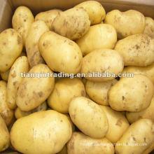 Kartoffelproduktion