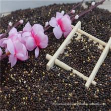 black broomcorn millet china origin