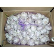 Embalagem da caixa Alho branco normal fresco (4,5cm e acima)
