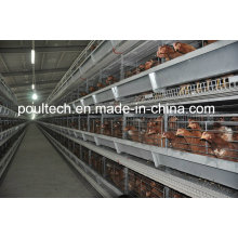H Type Chicken Battery Cage System