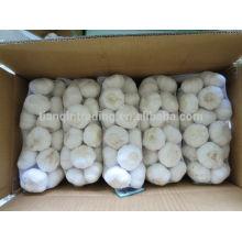 1kg Weiß Garic in China für 10kg / Karton, heißer Verkauf Knoblauch