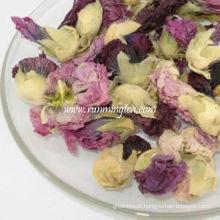 Chá violeta da flor do dragão