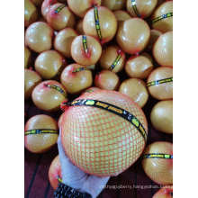 Gap Fresh Pomelo with Cheapest Price From China High Quality Brc Healthy