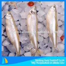 supplier of frozen seafood pond smelt in china