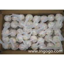 Alho branco normal fresco da boa qualidade nova da colheita 5,0