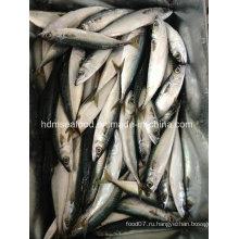 Рыба свежемороженая с морепродуктами скумбрии