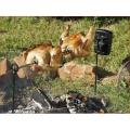 Sistema de asador Campfire para parrillas