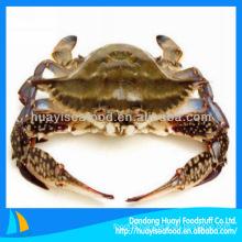 frozen blue swimming crab portunus pelagicus crab