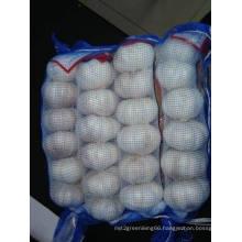 New Crop Jinxiang Normal White Garlic (5.0cm and up)