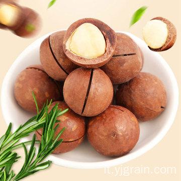 Prodotti per l'agricoltura all'ingrosso Noci di macadamia di alta qualità