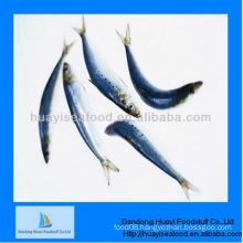 fresh frozen yummy good quality sardine fast delivery