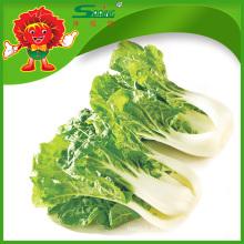 Repollo verde fresco de la col china de la alta calidad para la venta