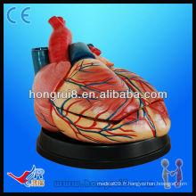 Modèle de coeur médical anatomique de haute qualité à vendre modèle de modèle jumbo de style nouveau modèle