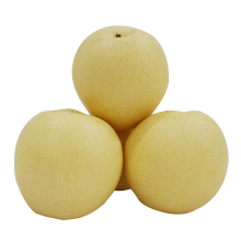 High Quality Hot Selling 2021 New Export Natural Crop Tasty Fresh Fruit Nashi Pear