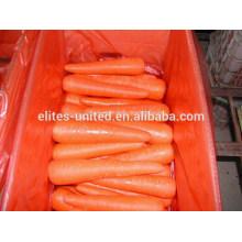 High Quality Fresh Carrot S M L