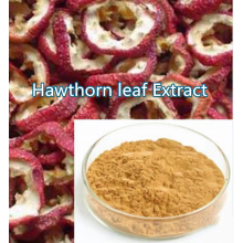 Buy online active ingredients Hawthorn leaf Extract powder