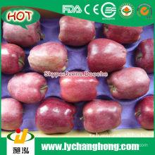 2014 Fresh Red Apples 18kg/carton
