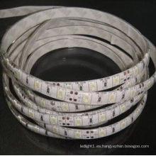 Nueva tira de luz LED IP65 SMD 5630 para exteriores de 144 vatios en blanco cálido, blanco frío