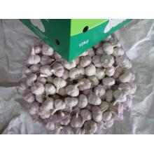 اشترِ Fresh Normal Garlic 2020