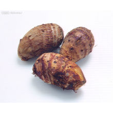 Nova colheita / qualidade superior / Taro fresco (60-80g)