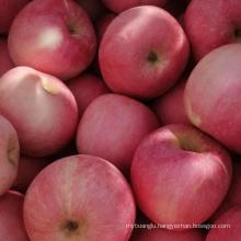 honey fuji apple stripped red apple golden apple