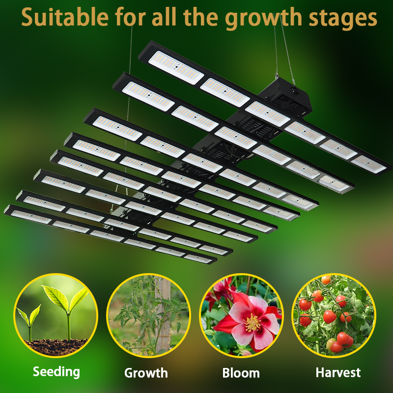 spider farm led grow light