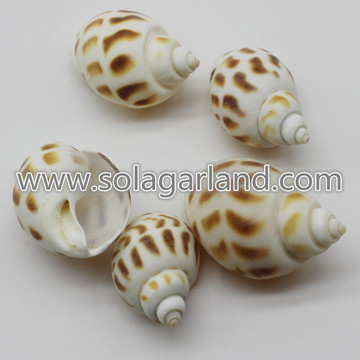 28-38MM Drilled Brown Tiger Shell Beads Natural Shell Beads