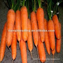 Hochwertige Karotten